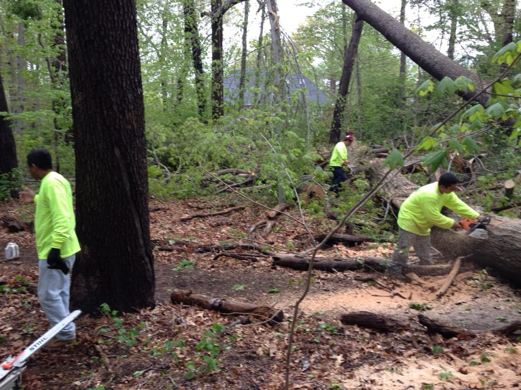 brooklyn tree removal reasons