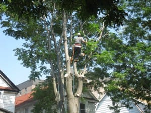 Tree Pruning Services In Brooklyn