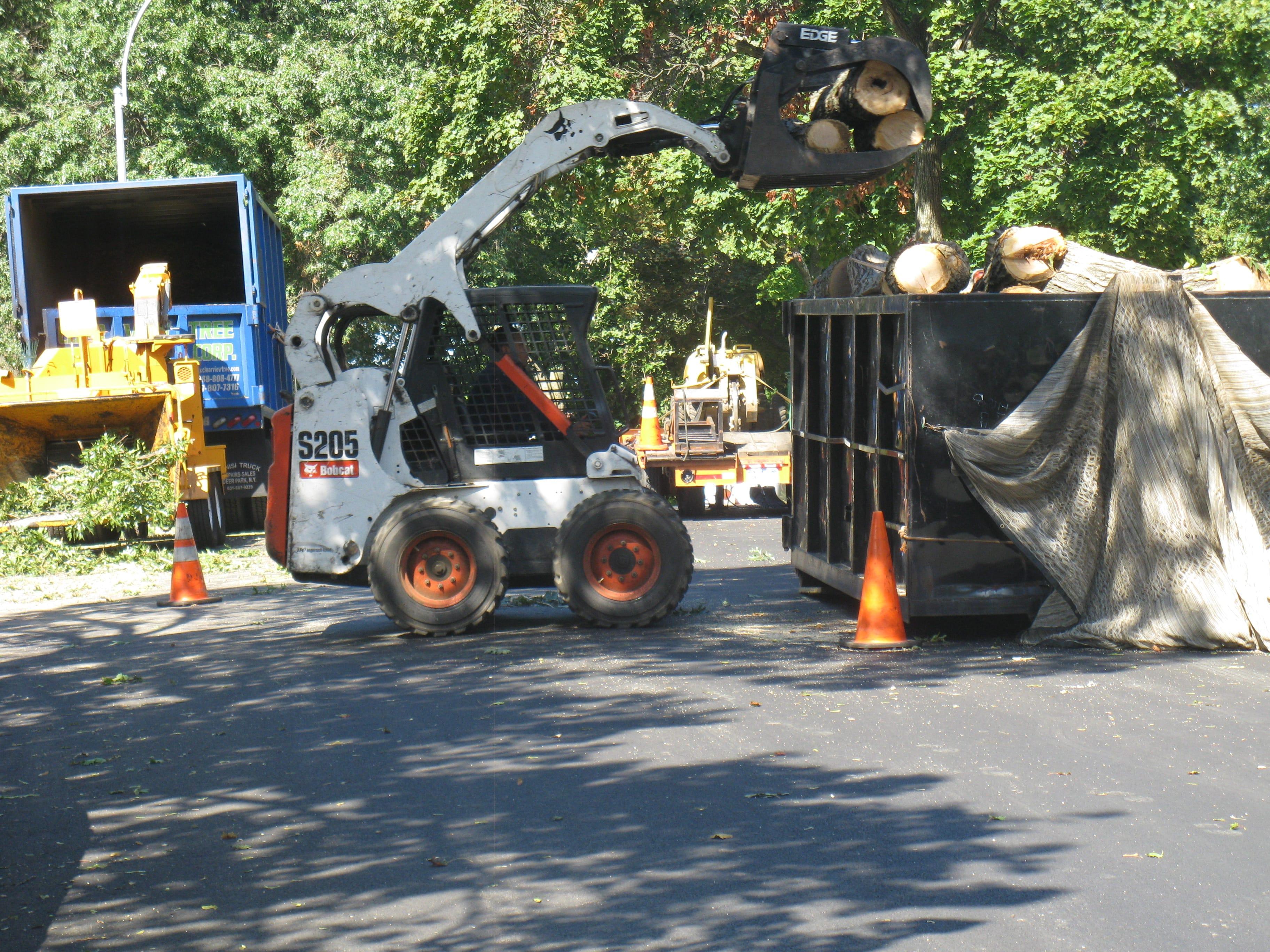 brooklyn tree removal options