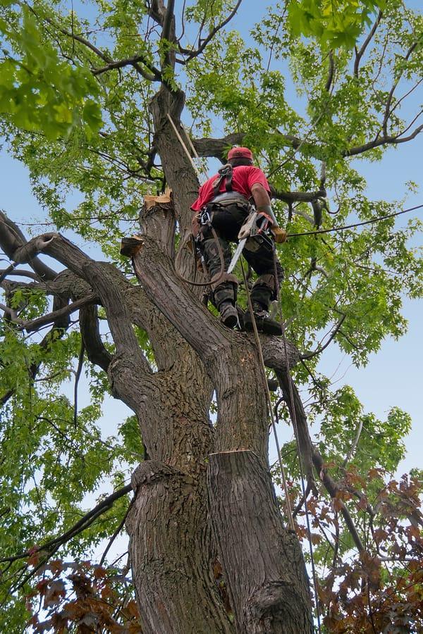 tree pruning brooklyn