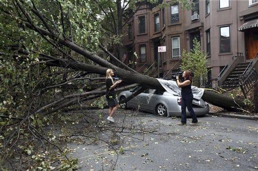 storm tree damage brooklyn