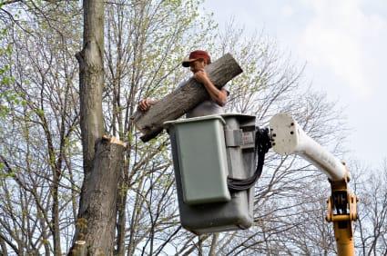 Brooklyn Tree Removal