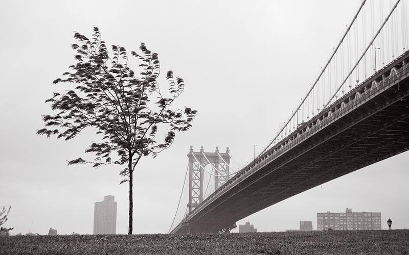 residential- commercial brooklyn tree services