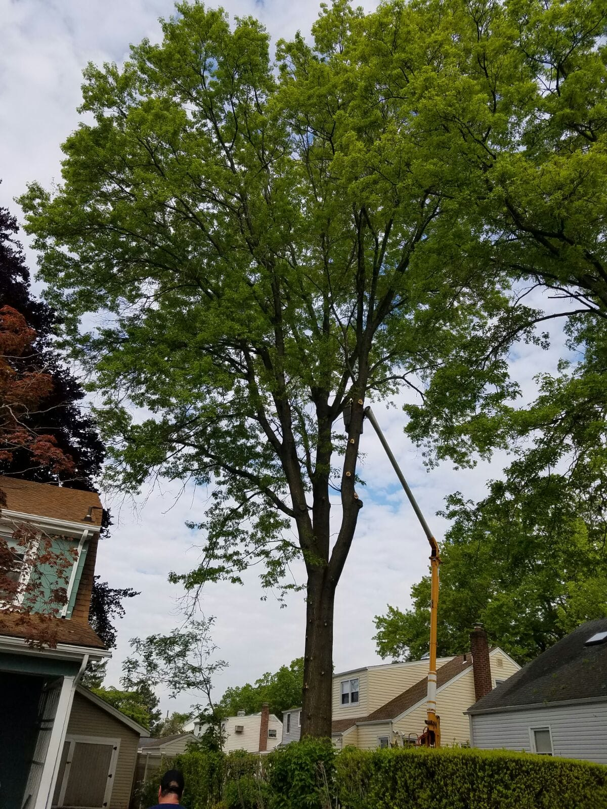 Our Brooklyn Tree Care Photo Gallery Brooklyn Tree Services