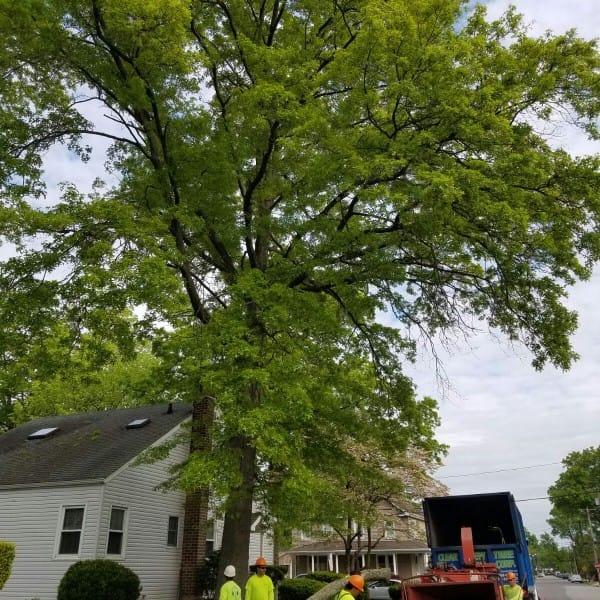 tree chipper