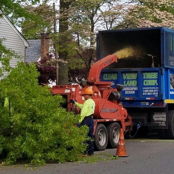 tree service 4