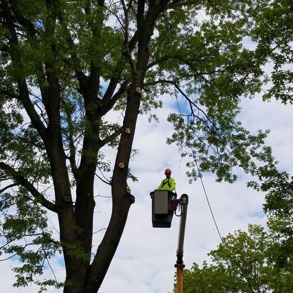 tree service 1