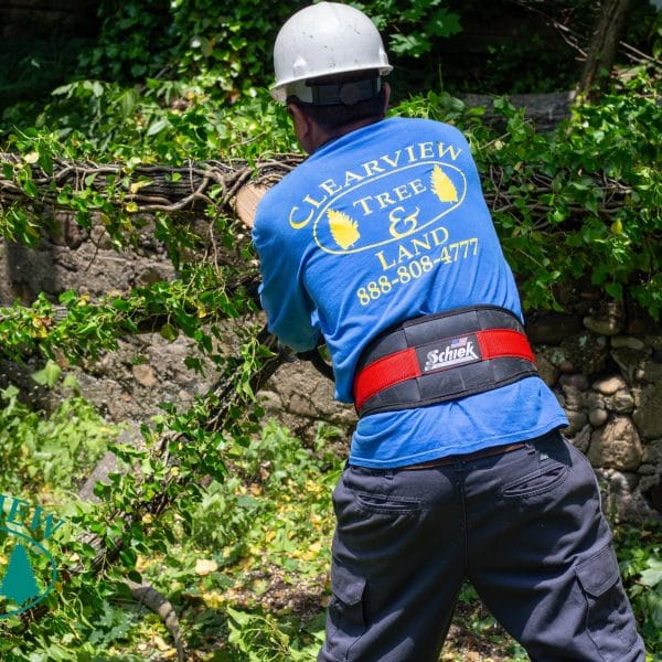 Brooklyn land clearing services
