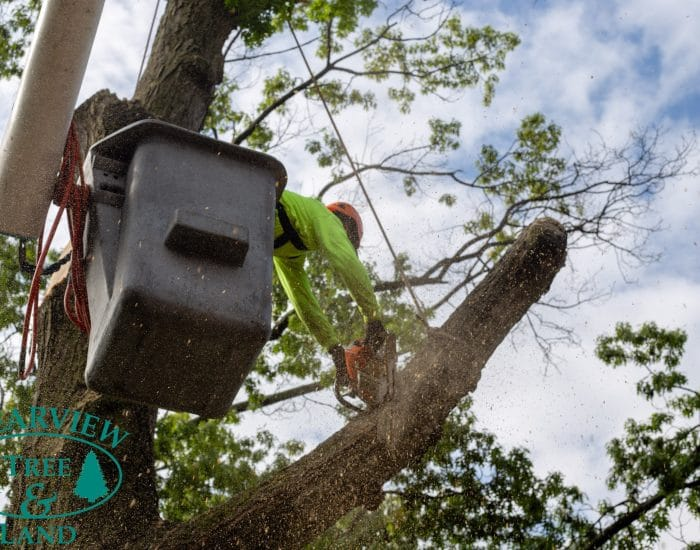 Brooklyn tree trimming services