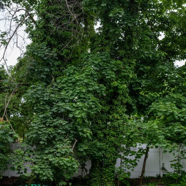 Brooklyn tree care with equipment
